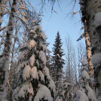 Зимний лес КОМИ, Вожаель