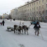 Олени в городе, Воркута