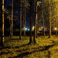 Night Trees, Инта