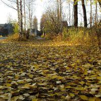 Осенняя листва, Печора