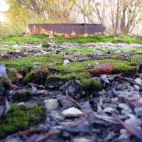 Мох возле канализационного люка, Печора