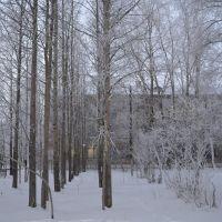 Парк у 83 школы ., Печора