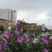 Клумба у пединститута, Сыктывкар