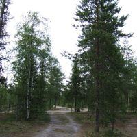 Усинск. 2009-07-17, Усинск