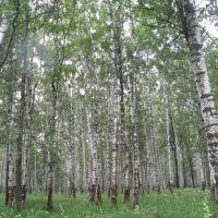 Парк, Волгореченск