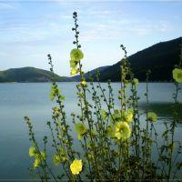 Озеро Абрау. Мальвы, Абрау-Дюрсо