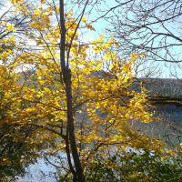 Осень в Абрау / Autumn on lake Abrau, Абрау-Дюрсо