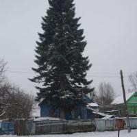 Посадил дед елку..., Апшеронск