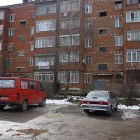 Береза посаженная мной весной 1984года., Апшеронск