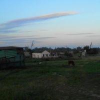 The baby cow on the field. July 2013. / Телёнок, пасущийся на поляне. Июль 2013., Ахтырский