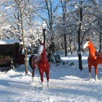 Гор-парк, карета и лошади, 08.01.2009., Белореченск