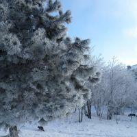 Прошел ледяной дождь, затем выпал снег... и все замерзло, Верхнебаканский