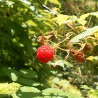 Первые плоды, Джубга
