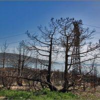 Последствие пожара ..., Кабардинка