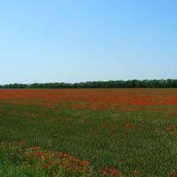 Маковые поля..., Калинино
