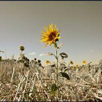 Цветок на пепелище..., Калинино