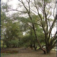 Лес около Кубани..., Калинино