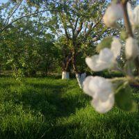 сад, Калининская