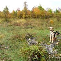 Походные собачки (dogs), Каменномостский