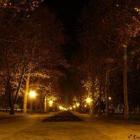 Ночная аллея..., Краснодар