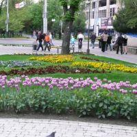 угол улиц Красная и Северная, Краснодар
