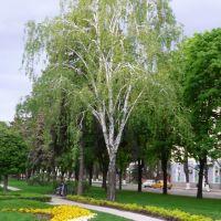 Весенний Краснодар., Краснодар