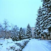 январь 2009, Кропоткин
