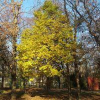 Осень в майкопском парке Autumn in Maykops park, Майкоп