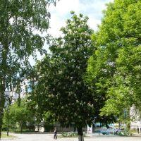 В парке., Мостовской