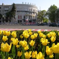 Flowers and city, Новороссийск