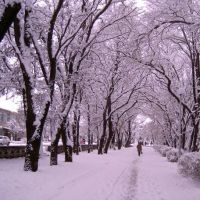 зимняя аллея 1, Отрадная