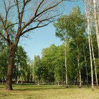 лужайка в парке, Северская