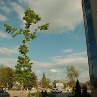 перекрёсток улиц Ленина и Петровского, Северская