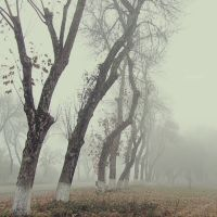Туман в октябре, Северская