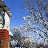 Дерево, Северская