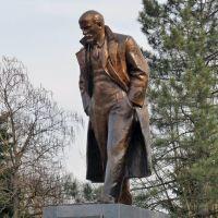 Задумчивый Ильич, Староминская