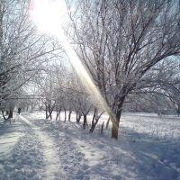 Зима, Староминская