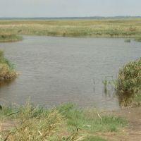 Дельта реки Ея, Старощербиновская
