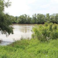 Река Кубань, Тбилисская