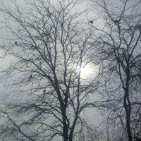 Красивые деревья в неожиданном месте, Тбилисская