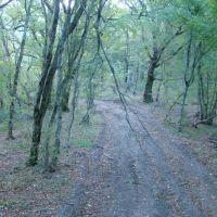 Лес, Тульский