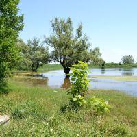 Подтопление / Underflooding, Усть-Лабинск