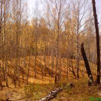 Золотая осень, Агинское