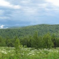 Тайга, вид с дороги на Белогорск, Горячегорск