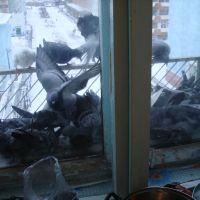 Кормление голубей в г. Дудинка, Дудинка