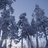 Winter Siberian forest, Кежма