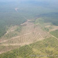 Вырубки леса, Кежма