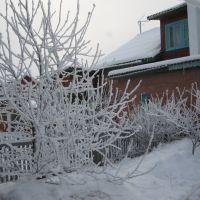 Зимний сад, Курагино