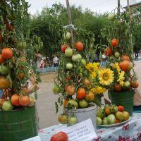 День помидора 2008 год (Day of tomatoes in 2008), Минусинск