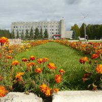 Клумба шафрана на центральной площади, Назарово